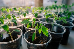 Soil quality is an important piece of starting seeds