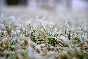 Your grass can be seriously damaged in spring frost if you're not careful