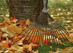 Raking Leaves is a Time Consuming Option for Leaf Cleanup