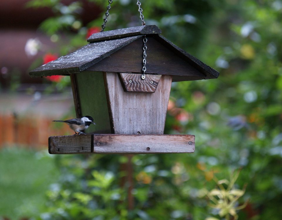 During construction and expansion of homes birds often lose their nesting habitats, shelter, and natural food sources. Because of this a number of native bird species have disappeared or gone extinct due to this type of expansion. You can help by replacing their homes and food sources with these easy steps.