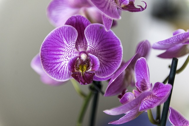 orchid-4068853_640