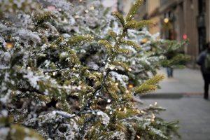 Fir Trees Make The Best Christmas Trees